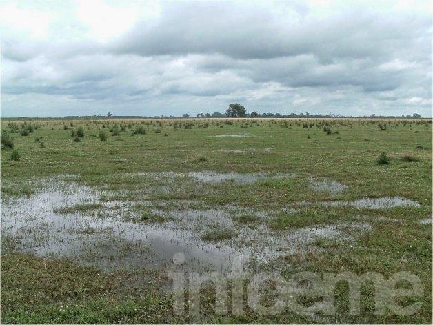 Los efectos de inundaciones sobre pastizales naturales