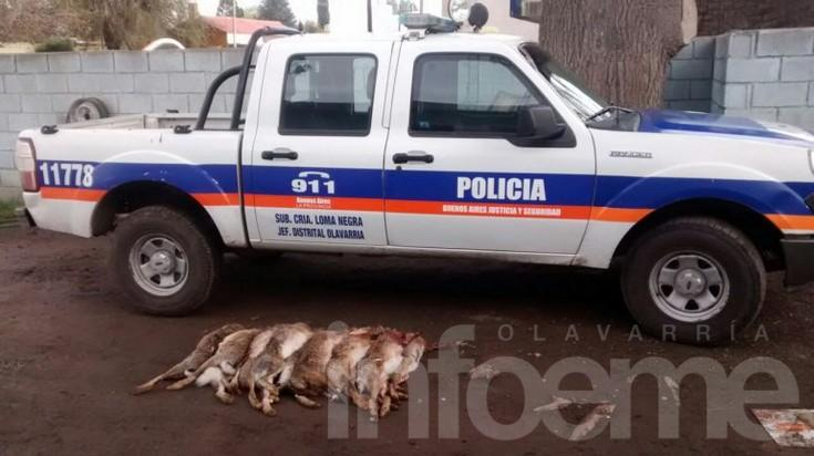 Atrapan a cazador furtivo tras persecución en Loma Negra
