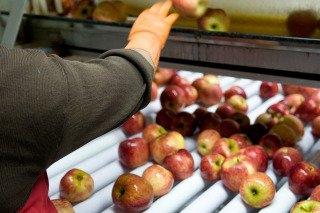 Brasil reabrió su mercado a las peras y manzanas argentinas