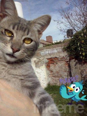Un gatito que busca hogar
