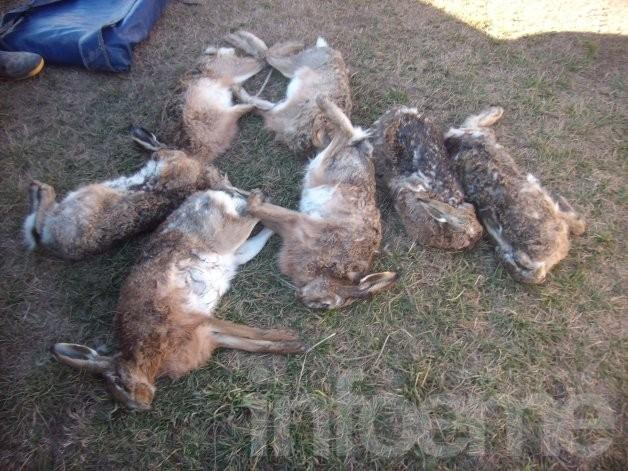 Aprehendieron a cazadores furtivos