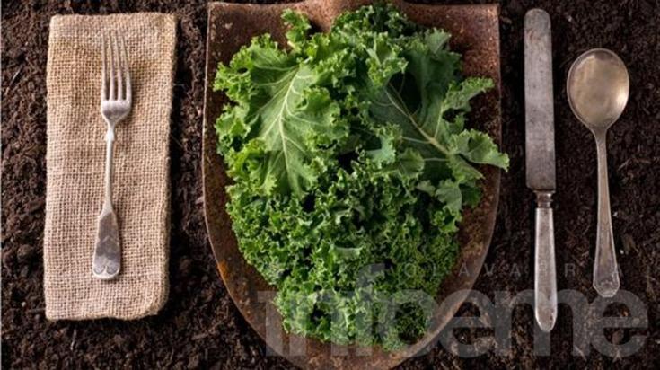 Kale: supervegetal que potencia a deportistas de elite