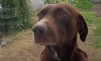 Una familia busca a su perro extraviado