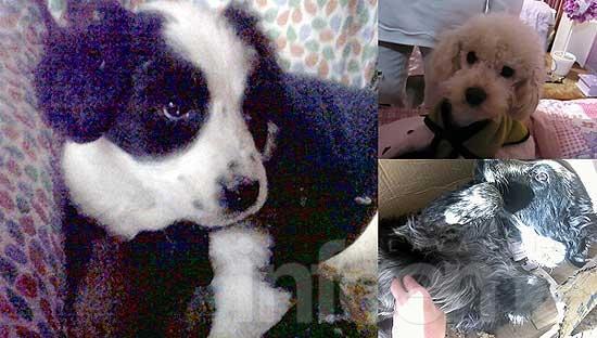 Perros extraviados y en adopción