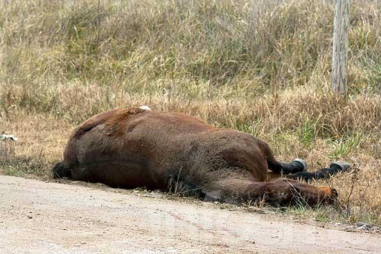 Reclaman por más controles de caballos sueltos en la calle