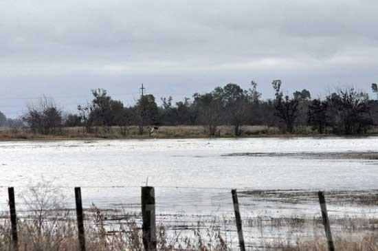 Declararon la emergencia agropecuaria para Olavarría