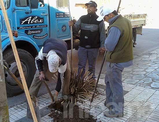 1560 nuevos árboles en Olavarría, comenzó la plantación