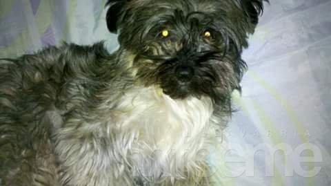 Se busca una perra en Mariano Moreno