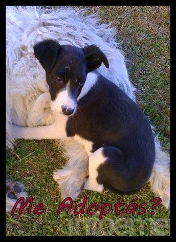 Una cachorra abandonada, busca hogar