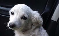 Buscan a los dueños de una mascota perdida