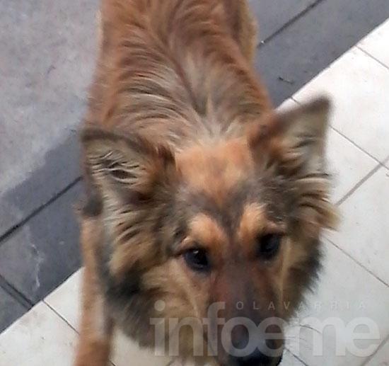 Ofrecen una perra en adopción
