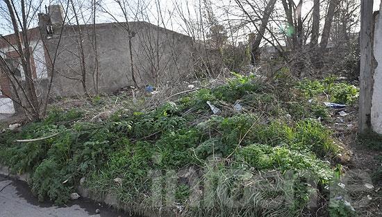 Vecino deberá pagar $5000 por la limpieza de su terreno
