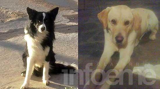 Perros encontrados