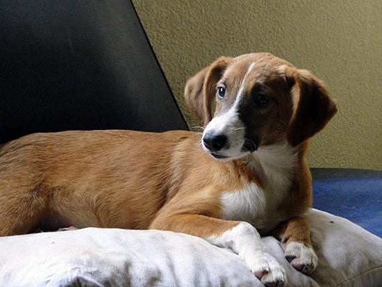 Ofrecen mascotas en adopción responsable