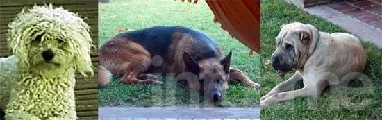 Gratifican la devolución de perros extraviados