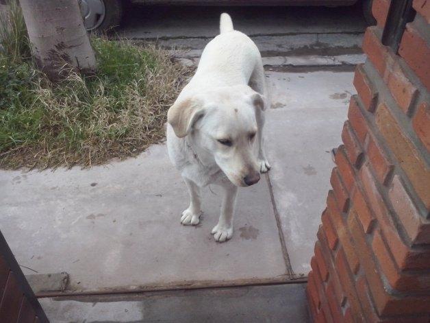 Se encontró esta perra en el barrio Bancario
