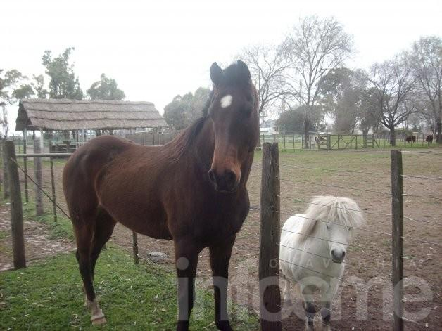 Se encontró un equino y buscan a sus dueños