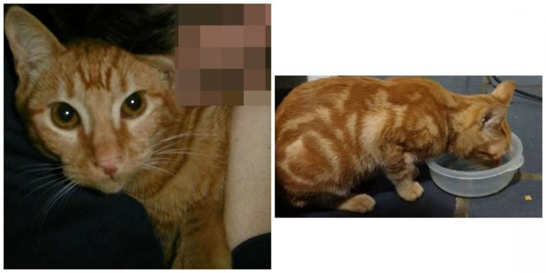 Una familia busca a Kichi, su gato