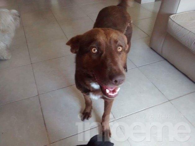 Buscan a perro extraviado en barrio San Carlos