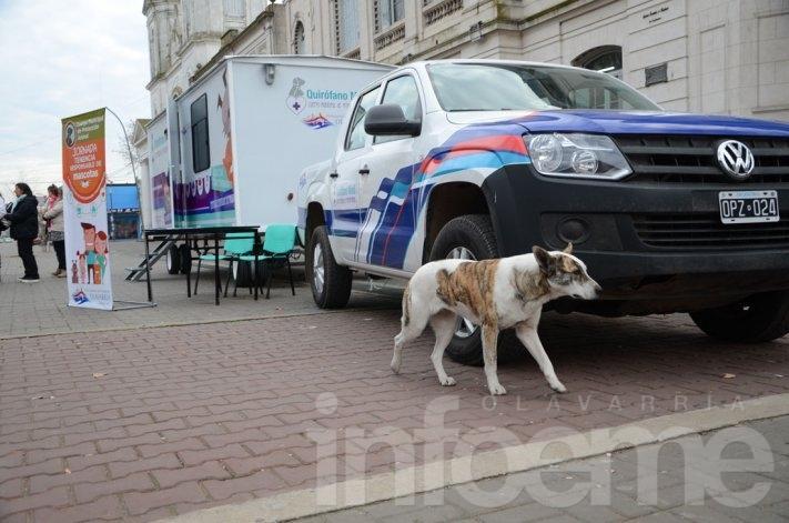 El quirófano veterinario móvil estará en Sierra Chica