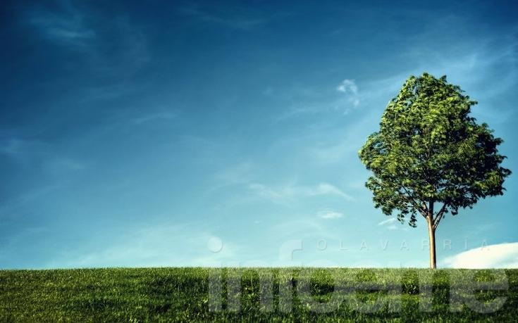 Suspenden actividades previstas por el Día del Árbol
