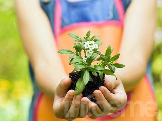 Jornada de jardinería en Del otro lado del Árbol