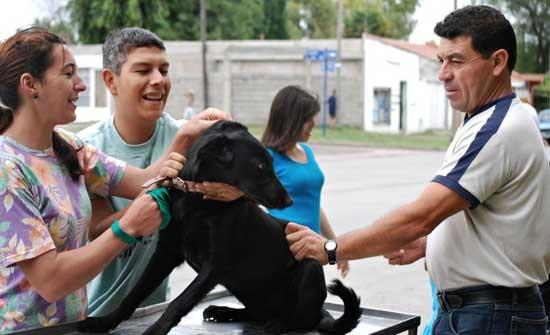 Tenencia responsable de mascotas: 600 animales castrados en los últimos meses