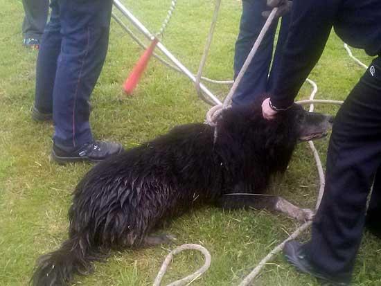 Bomberos rescataron un perro que cayó a la orilla del arroyo