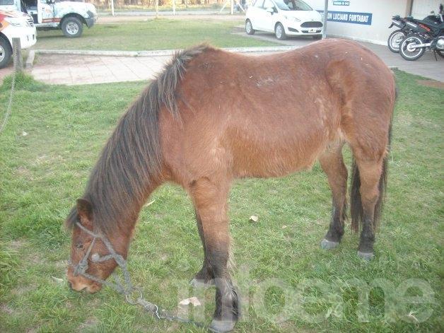 Buscan al dueño de un caballo