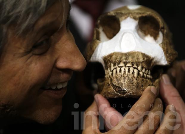 Descubren en Sudáfrica al nuevo ancestro humano