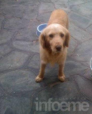 Encontraron un cachorro en Pueblo Nuevo