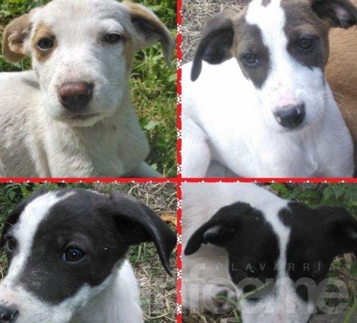 Ofrecen perritos en adopción