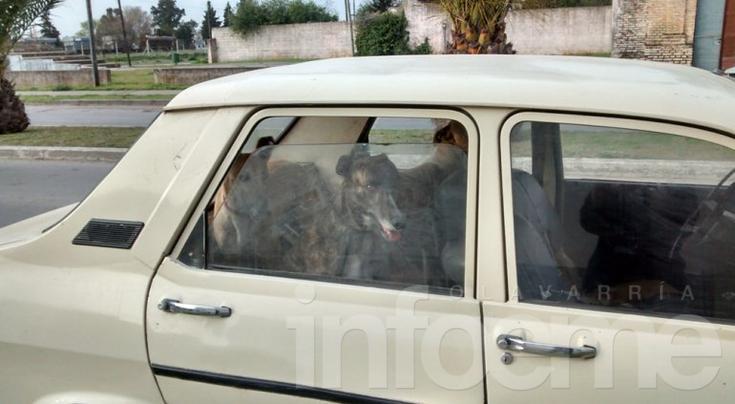 Policiales: hombre con un menor, seis perros y una liebre muerta