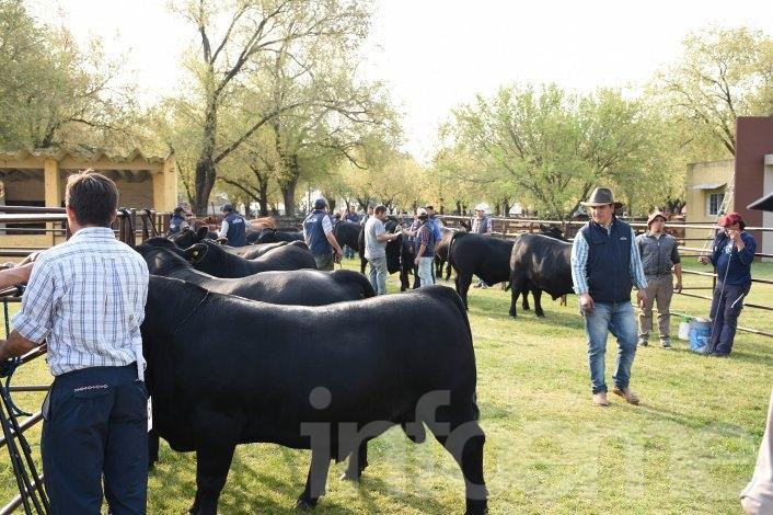 Se lanzó la Exposición Nacional Angus de Primavera