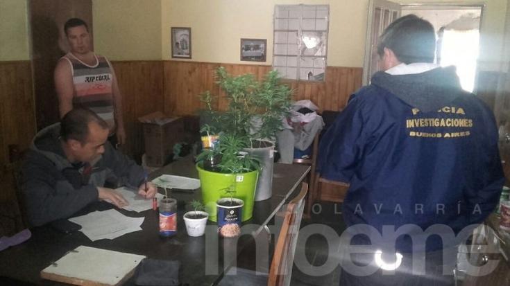 Allanamiento: secuestran ocho plantas de marihuana y un arma