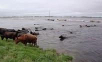 Carbap advierte sobre el precio de la carne