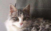 Buscan a los dueños de un gato perdido