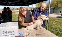 Cronograma de vacunación antirrábica canina y felina
