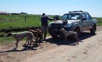 Interceptan a galgueros de Olavarría cazando