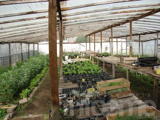 """Alumnos de """"Casa de Helen"""" producen y venden plantas"""