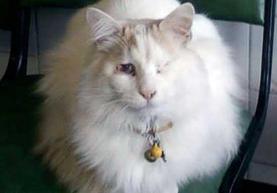 Buscan un gato ciego que se perdió en Pueblo Nuevo
