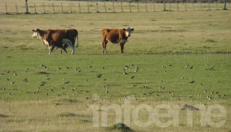 Claves para lograr altas producciones de carne por hectárea