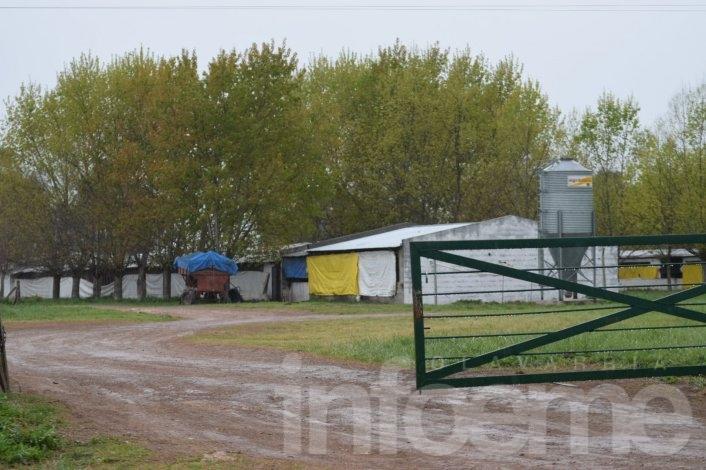 180 crías porcinas murieron a raíz de un incendio en un criadero