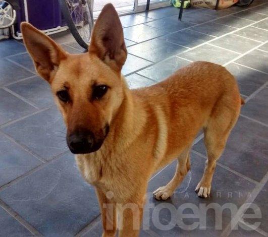 Rosario: Un hombre irá a juicio por matar a un perro
