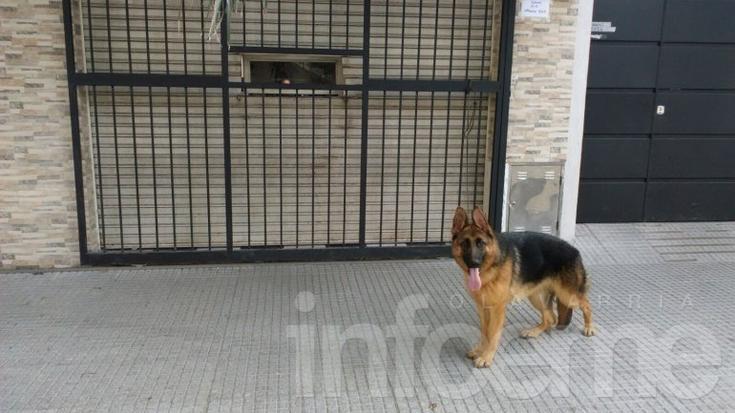 Buscan a esta cachorra, se gratifica su aparición