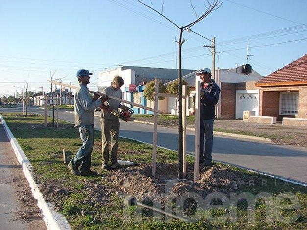 Continúa la plantación de árboles en Olavarria