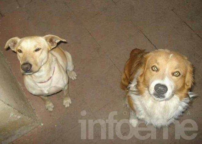 Buscan a dos perros sin collar