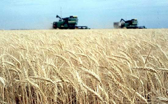 """Mesa agropecuaria: la presión fiscal """"se torna insoportable"""""""
