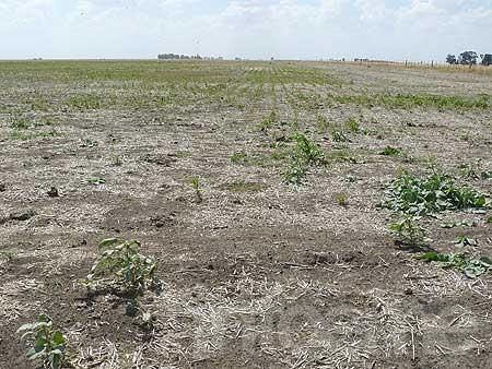 Olavarría registra un importante déficit de lluvias en el año