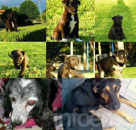 Perras halladas y cachorros en adopción